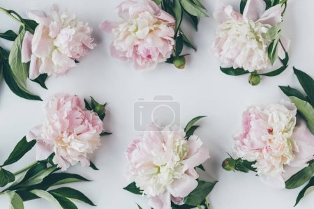 top view of frame with light pink peony flowers with leaves on white