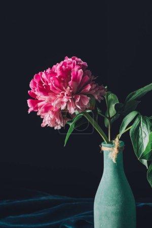 pink spring peony flower in vase on dark background