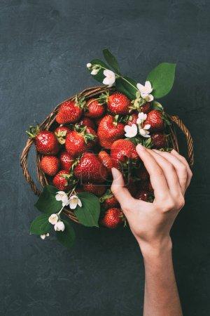 Photo pour Recadrée coup de main de l'homme et des fraises mûres fraîches dans le panier - image libre de droit