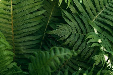 close up background with green fern leaves