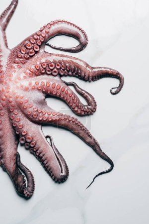 top view of raw octopus on light marble surface