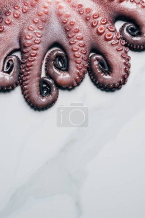 top view of tentacles of big fresh octopus on marble surface