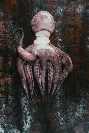 top view of big raw octopus on dark rusty surface