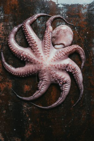 top view of big uncooked octopus on rusty metal surface