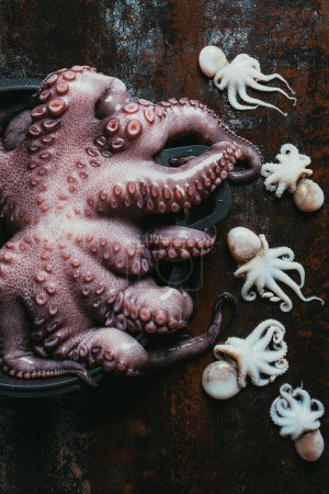 top view of one big octopus in saucepan and small octopuses on rusty metal surface