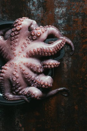 top view of uncooked octopus in saucepan on rusty surface