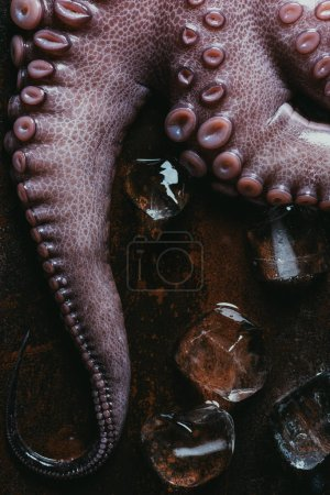 top view of raw octopus tentacles with ice cubes on rusty metal surface
