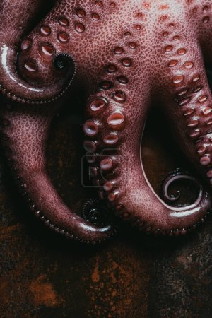 top view of big raw octopus on rusty metal surface