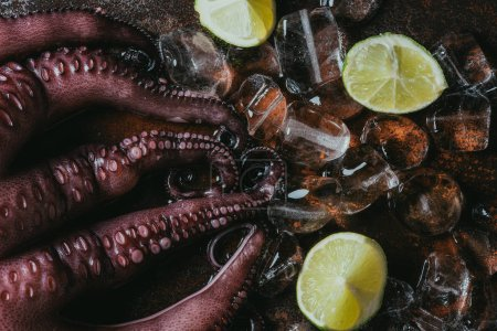 top view of big uncooked octopus with ice cubes and limes