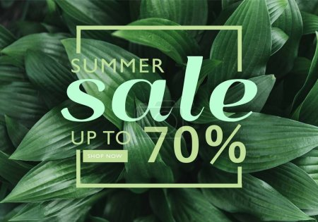 Full frame image of hosta leaves with summer sale discount in frame