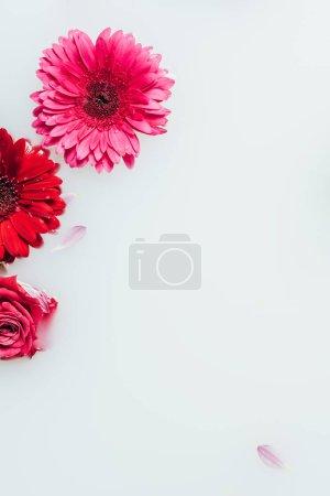 top view of beautiful rose and gerbera flowers in milk backdrop