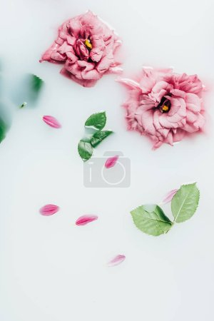 top view of arranged beautiful pink roses with green leaves in milk