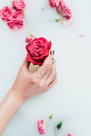 partial view of woman holding beautiful rose in hand in milk with various flowers