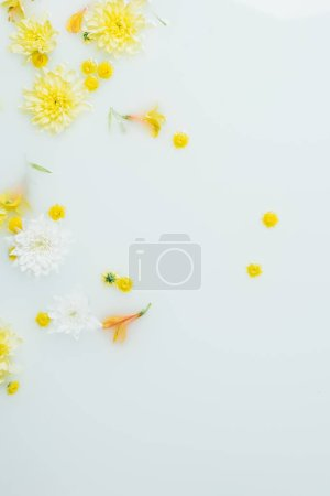 top view of yellow and white chrysanthemum flowers in milk backdrop