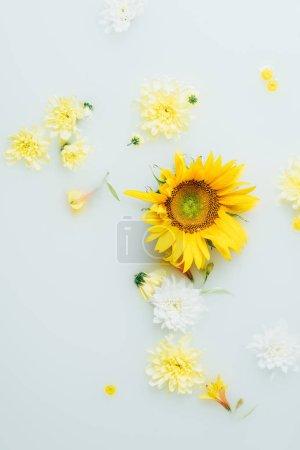 top view of yellow sunflower and chrysanthemum flowers in milk