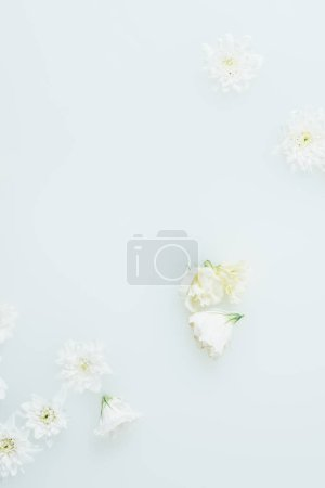 top view of arranged beautiful white flowers in milk