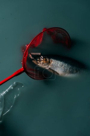 top view of fish with cigarettes in red butterfly net and plastic bottle near by flowing in water, environmental protection