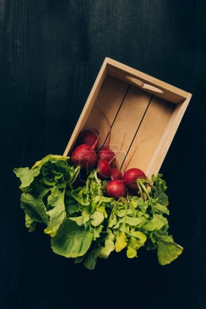 Photo for Top view of radishes in wooden box on grey dark table - Royalty Free Image