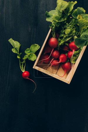 Photo for Elevated view of radishes in wooden box on grey dark table - Royalty Free Image