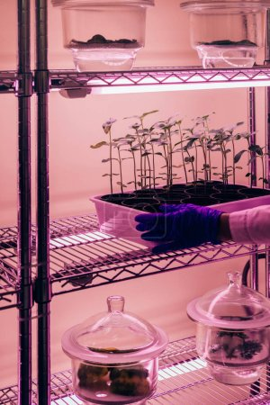 cropped image of scientist putting potted plants under ultra violet light in modern laboratory
