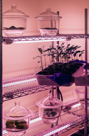 Photo for Partial view of biologist putting potted sprouts under ultra violet light in modern laboratory - Royalty Free Image