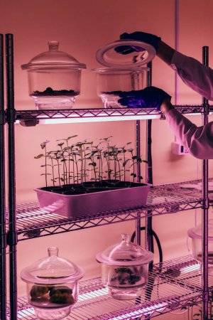 partial view of scientist checking glass container in agro laboratory with ultra violet light