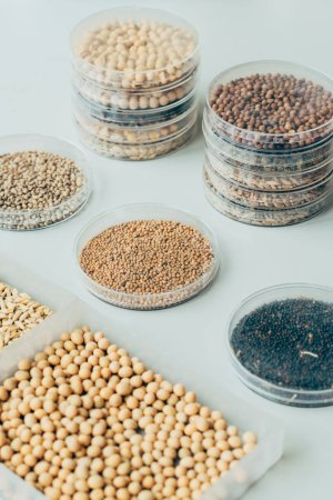 selective focus of various grains in plastic containers in modern agro laboratory
