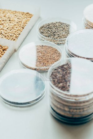 close up view of various seeds in plastic containers in modern biotechnology laboratory