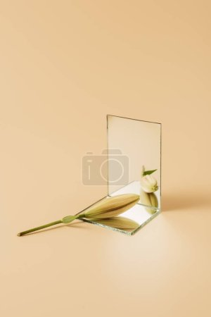 bud of lily flower reflecting in mirror on beige table