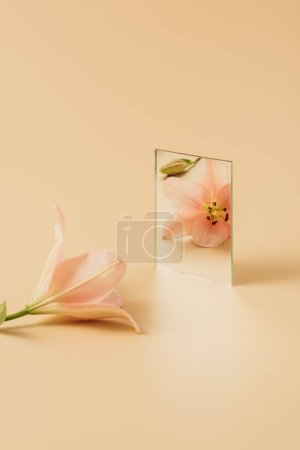 pink beautiful lily flower reflecting in mirror on beige table