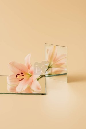 lily flower reflecting in two mirrors on beige table