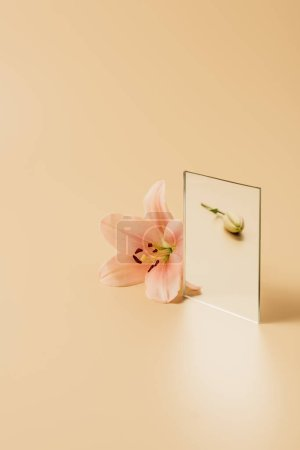 lily flower reflecting in mirror on beige table