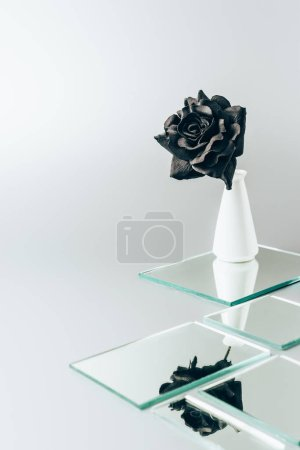one black rose in vase reflecting in mirrors isolated on white