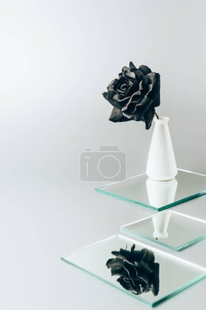 black rose in vase reflecting in mirrors isolated on white