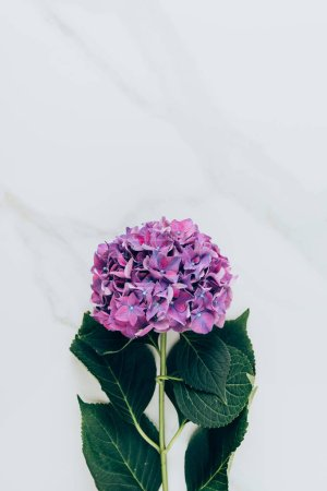 top view of purple hydrangea flower on marble surface