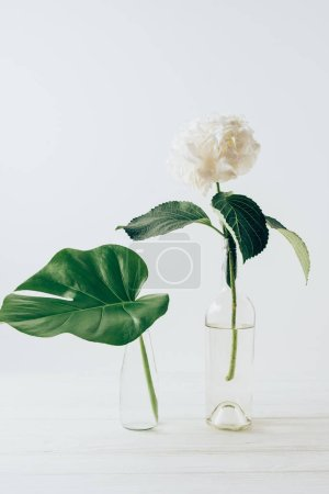 white blooming flower of hydrangea in vases, on white