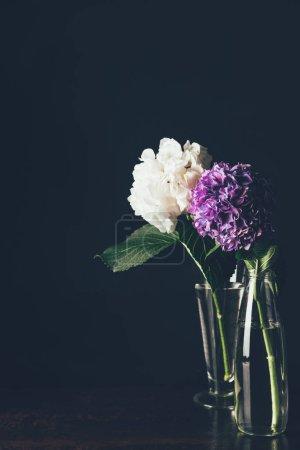 Foto de Flor de hortensia blanca y púrpura en floreros de cristal, negro - Imagen libre de derechos