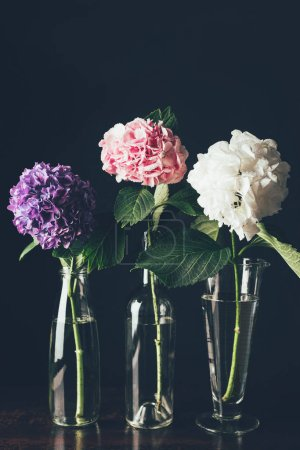 Photo for Beautiful pink, white and purple hortensia flowers in glass vases in row, on black - Royalty Free Image