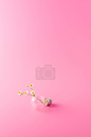 close-up view of light bulb with beautiful chamomiles on pink