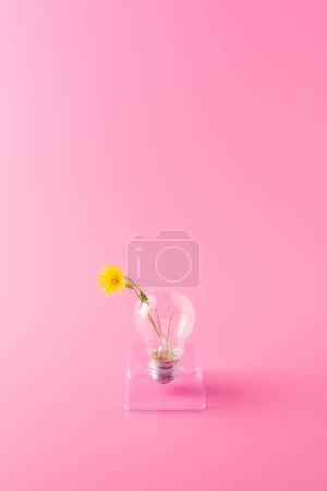 close-up view of light bulb with beautiful yellow flower on pink