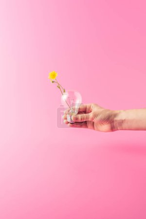 cropped shot of person holding light bulb with yellow flower isolated on pink