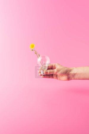 Foto de Toma recortada de titular de bombilla con flor amarillo aislado en rosa - Imagen libre de derechos
