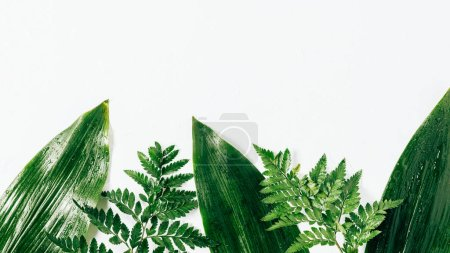 Photo for Flat lay with assorted wet green foliage on white backdrop - Royalty Free Image