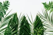 """Постер, картина, фотообои """"плоские лежал с ассорти из влажных зеленых листьев на белом фоне"""""""