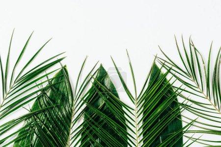 Photo pour Pose plate avec feuillage vert humide assorti sur fond blanc - image libre de droit