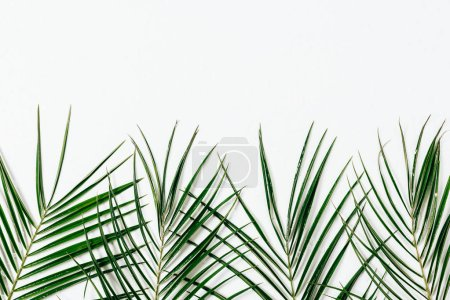 top view of green palm leaves arranged on white backdrop