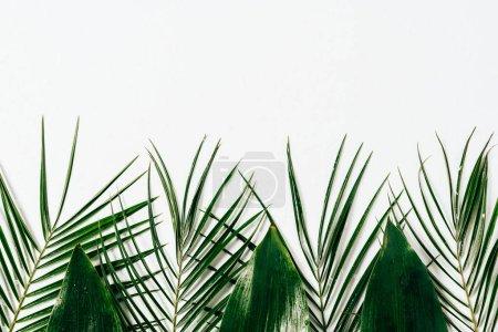 Foto de Endecha plana con una variedad follaje verde sobre fondo blanco - Imagen libre de derechos