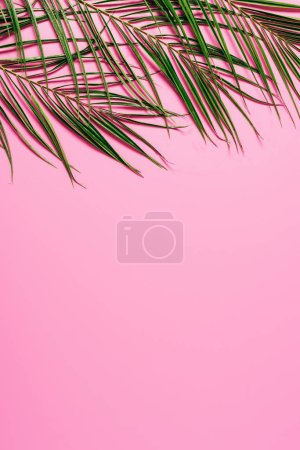 flat lay with green palm leaves on pink backdrop