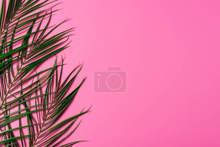 top view of exotic palm leaves arranged on pink background