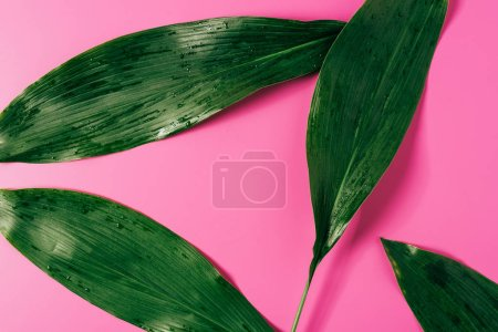 top view of water drops on green foliage on pink background